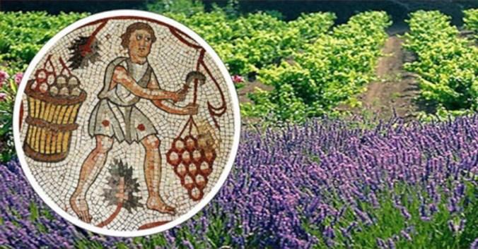 blog vin beaux-vins histoire vignoble provence
