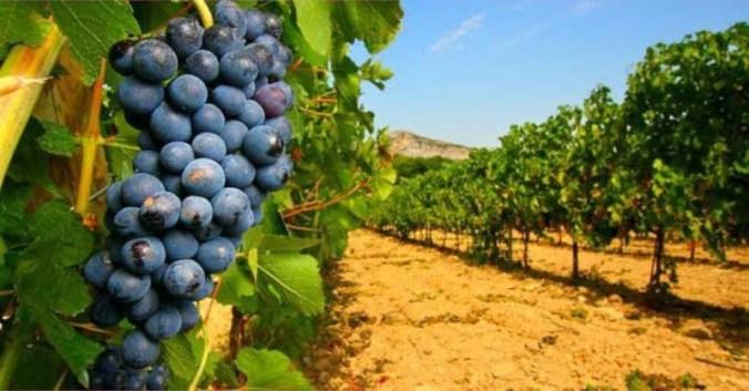 blog vin beaux-vins terroir remis en cause vin levures