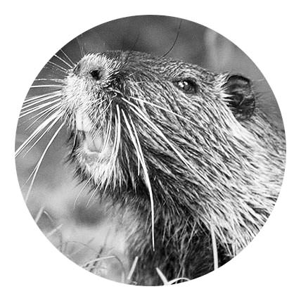 beaver-agency-personas-rufus