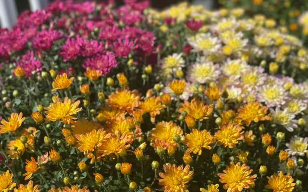 We Fall for Mums, Every Time!