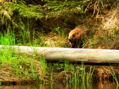Beavers Woodland, How it started