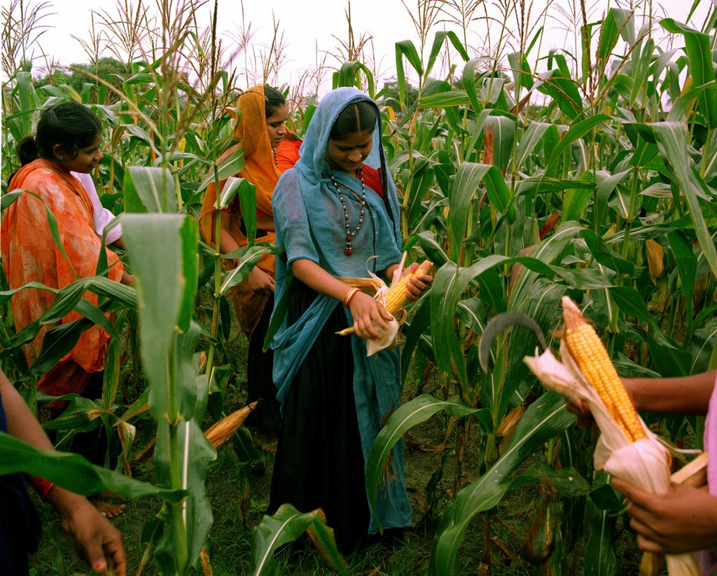 Women learning about agriculture at the Barli Development Institute for Rural Women in Indore, India