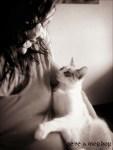 miradita_felina_comp