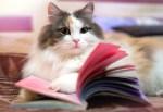 libros cueentos gatos