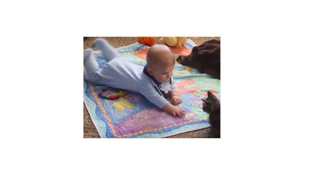 [Vídeo] Bebés jugando con sus gatos