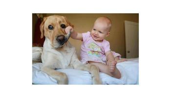 [Vídeo] Bebés jugando con sus perros