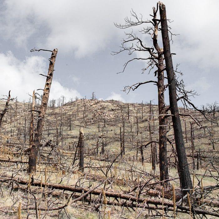 Die Zerstörung unserer Regenwälder