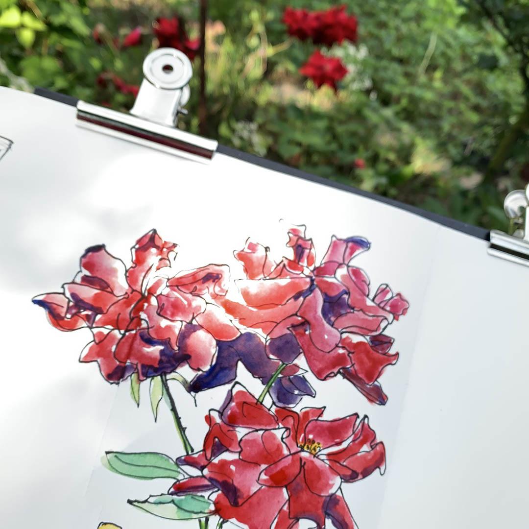 9-gartenzeit-rosen-zeichnen-aquarell-12von12 © Viktoria Cvetković bebildert.eu