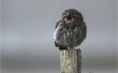 Der frühe Vogel ist früher müde