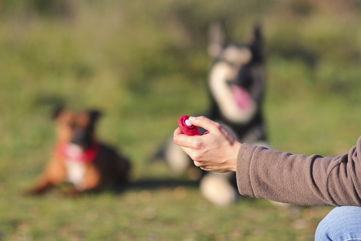 bebopusa products and pet training