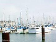 Yachts in San Francisco harbor