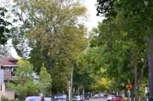 Tree-lined neighborhood