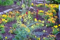 Shedd's colorful garden