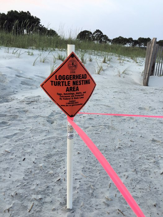 Loggerhead sea turtle nest sign, cordoned and marked by the South Carolina department of Natural Resources.