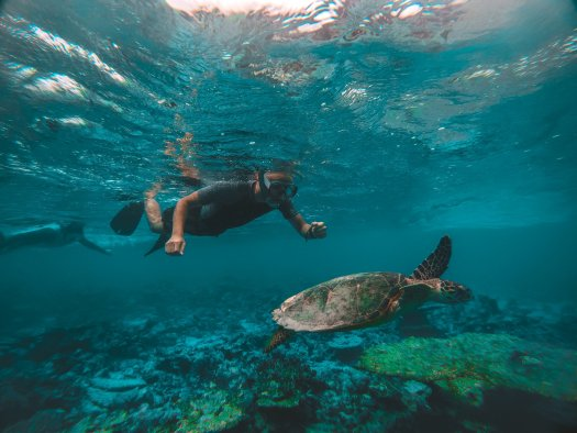 Photo of a diver looking at a sea turtle in the ocean.