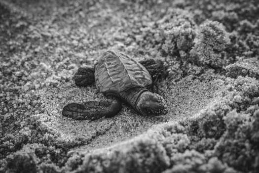 Photo of a newborn sea turtle. Photo by Alfonso Navarro on Unsplash