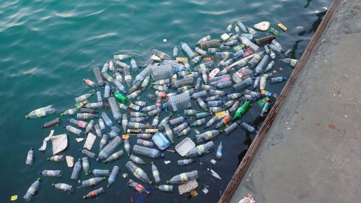 Plastic bottles floating in water