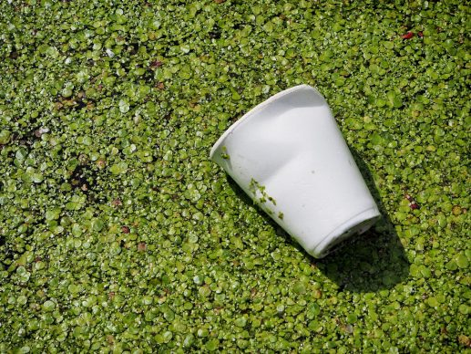 Styrofoam cup floating in water with plantlife