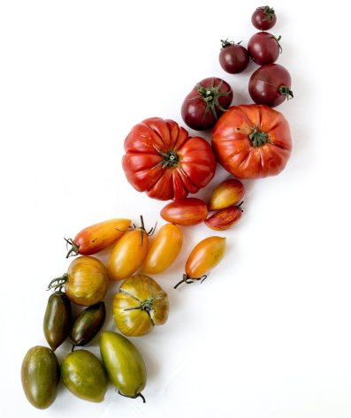 Colorful tomato arrangement