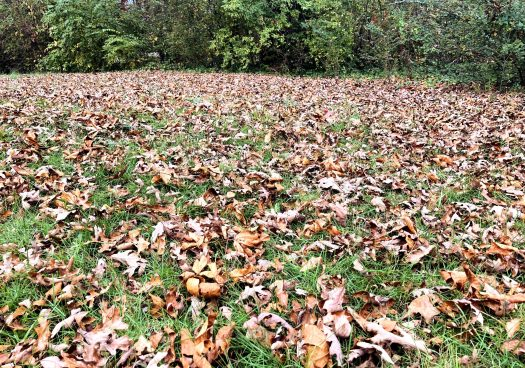 Yard with leaves