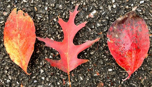 Three colorful leaves lined up together