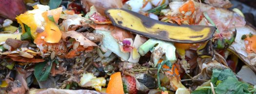 Rotting or composting fruit and vegetable waste