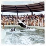 Hugo and Lolita at the Miami Seaquarium in the early 1970s.