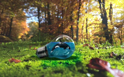 Orca swimming inside of a lightbulb, lying on its side on a green forest floor with autumn colored foliage and trees in the background.