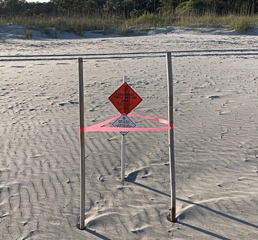 Taped off with sign posted, Loggerhead sea turtle nest on the beach.