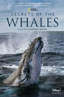 Secrets of the Whales cover art