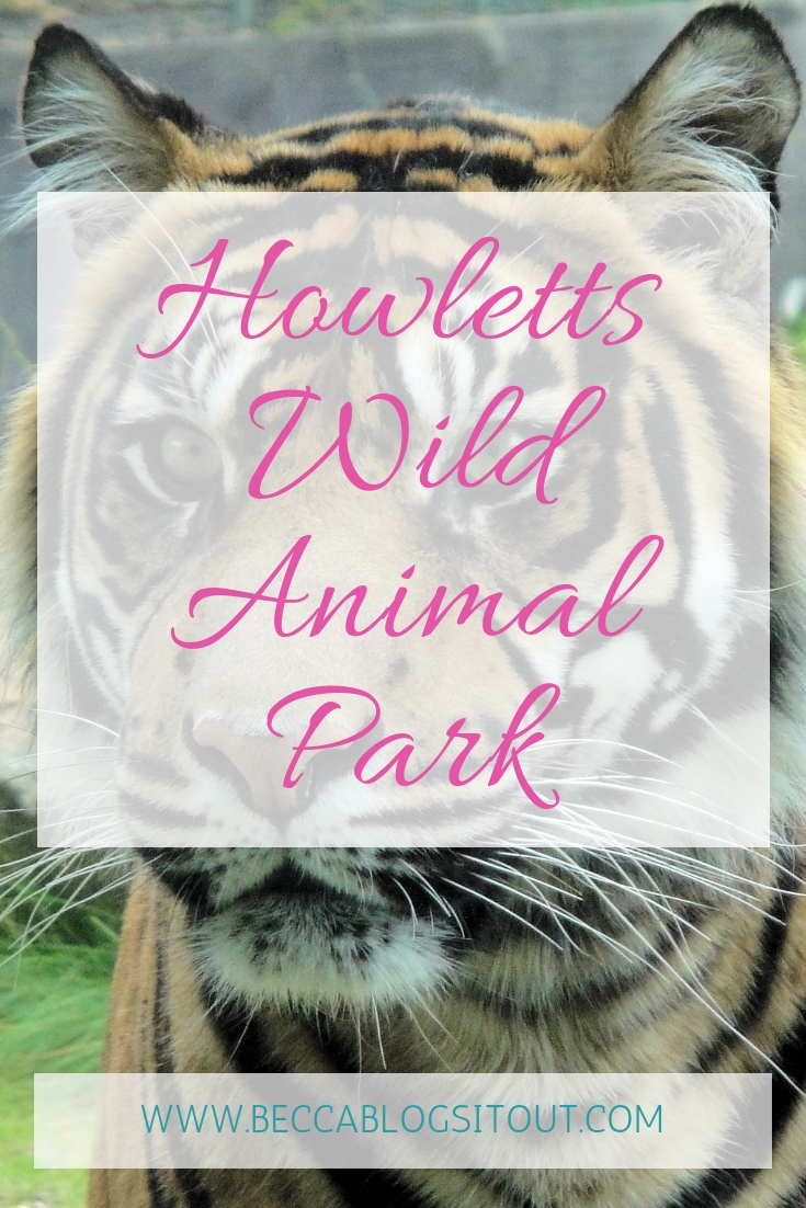 Howletts Wild Animal Park - title over photo of tiger