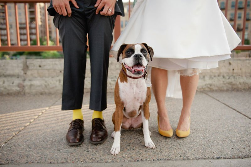 bride and groom with dog at stone arch bridge minneapolis