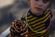 finding pine cones outside of the lava tunnel
