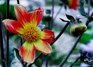 Flower at Aramoana, Dunedin. NZ