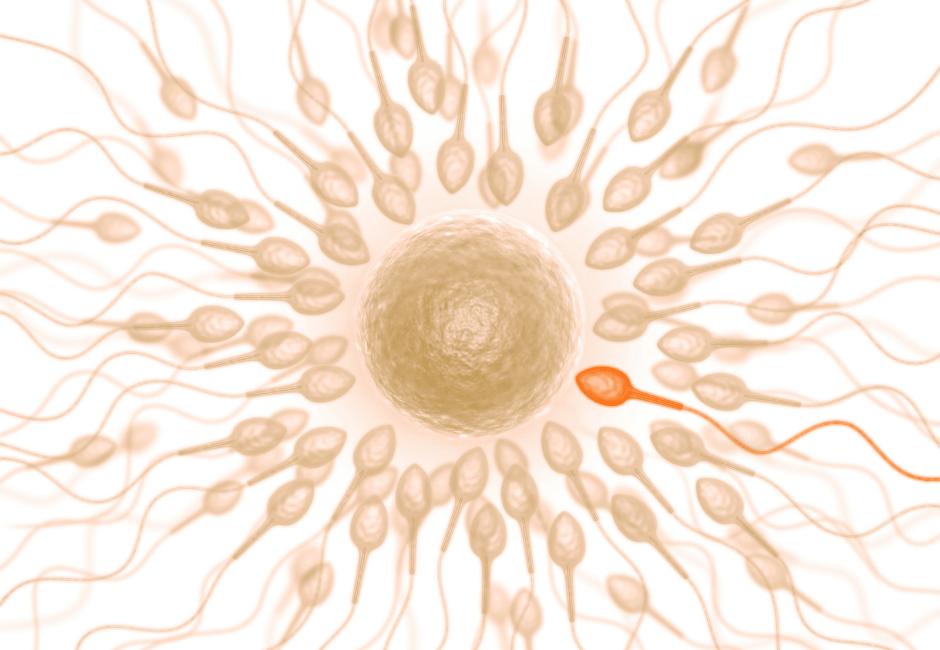 Sperm heath, male factor infertility, fertility, natural fertility, infertility