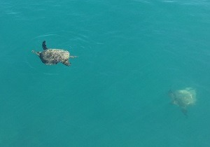Turtles at Long Island