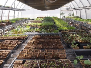 Greenhouse filled with seedlings