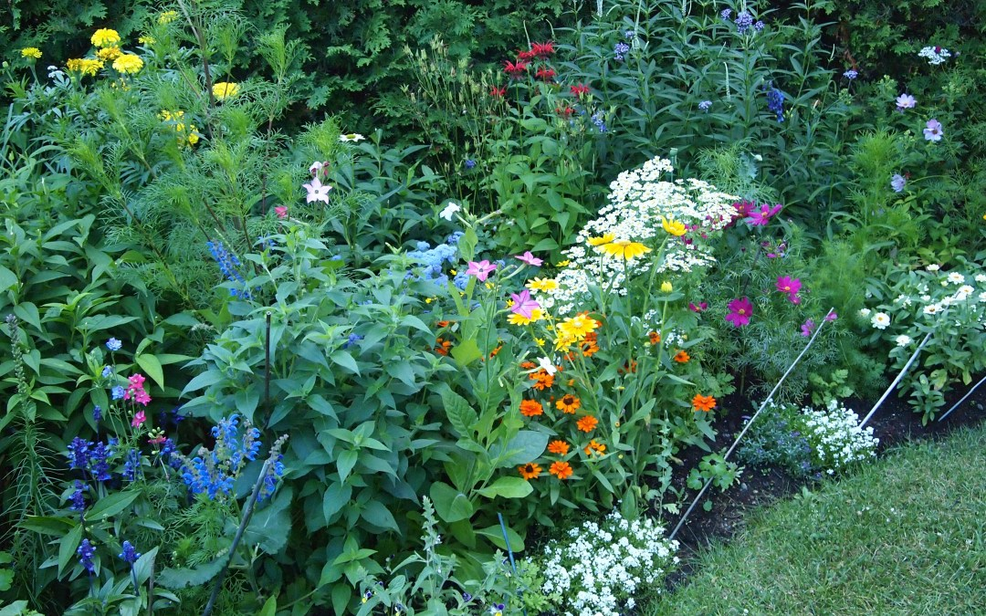 Using Less Water in the Garden