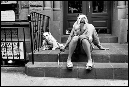 erwitt-bulldog