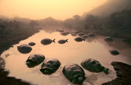 Top 40 Naturfoto / Conservation International