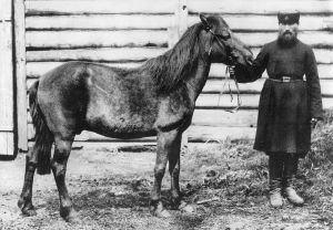 This horse, which died in Russia in 1909, may have been the last individual related to the original wild horses, known as tarpans. No true tarpans survive today.