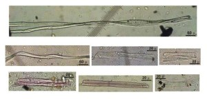 Microscopic photos of woven fibers found in a Georgia cave and dating to 36,000-30,000 BCE.