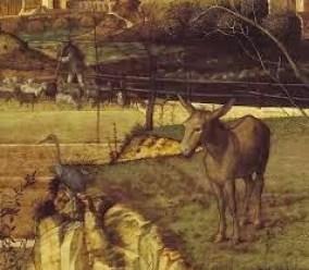 st-francis-animals