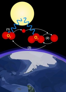 A diagram of the ozone cycle: (1) the sun's radiation splits an oxygen molecule into two oxygen atoms; (2) a single oxygen atom bonds with an oxygen molecule to make an ozone molecule; (3) solar radiation splits an ozone molecule into an oxygen molecule and an oxygen atom.