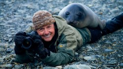 An undated photograph of Art Wolfe with a young Southern elephant seal on South Georgia Island.