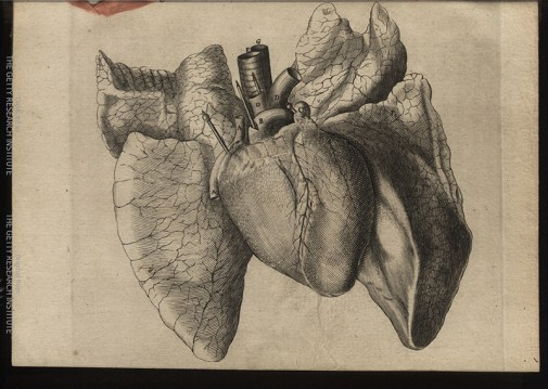 Schuyl's flap anatomy has flaps that the reader can lift to simulate a dissection of the heart, Tractatus de Homine, 1662, figure I.