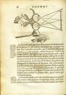 The co-ordination of the senses, L'Homme, 1677, page 78.