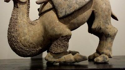 Rare Large Crouching Bactrian Camel (2)