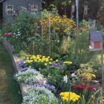 Flowers offer a bright color palette in one of the Becketwood garden plots.