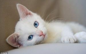 funny-cat4